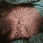 bột vỏ lụa hạt điều